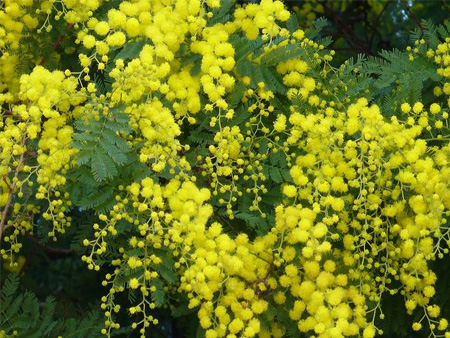List of flowers and their scientific names flowers healthy types of yellow flowers names klejonka mightylinksfo