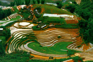 Terraced rice fields in Sapa