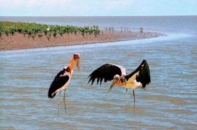 City Bird in Ca Mau