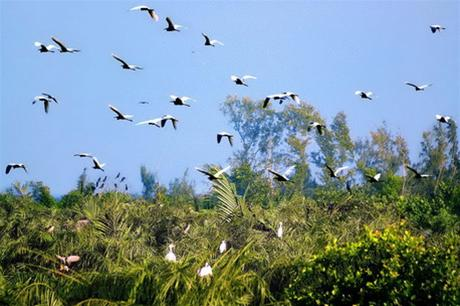 Vam Ho Bird Garden over view