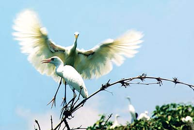 Vam Ho Bird Garden view