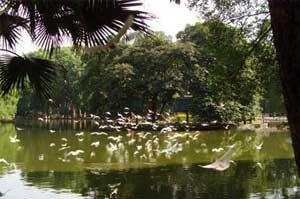 Bach Thao Park