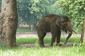 Elephant in Thu Le Park