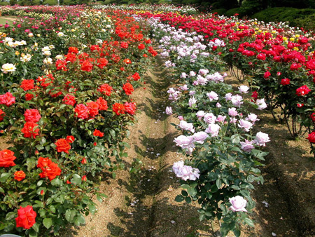 Colorful flowers in Dalat city
