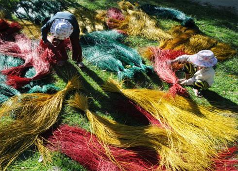 Drying dyed sedges