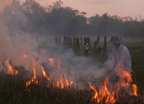 Burning fields for the next crop