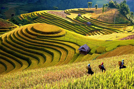 Mu Cang Chai terraced field is promoted as a tourism destination