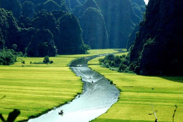 Rice field on bank of Tam Coc River