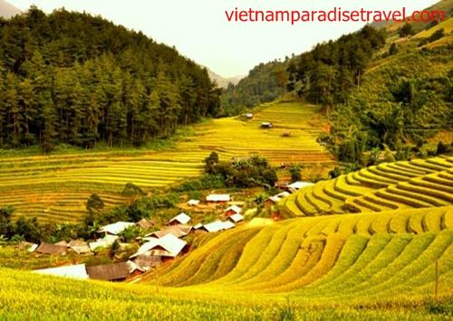Mu Cang Chai - Yen Bai - Vietnam