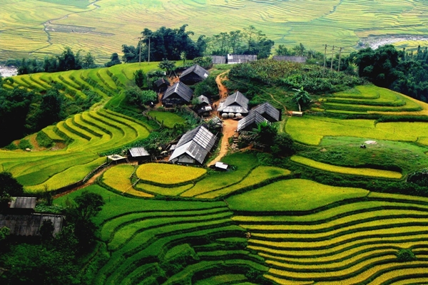 Scenic terraced rice fields in Sapa