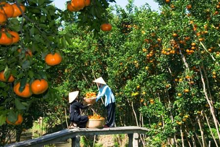 Vinh Long Orchard Garden.