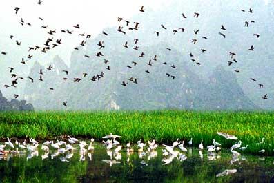 Van Long nature reserve & Kenh ga floating village 1 day tour