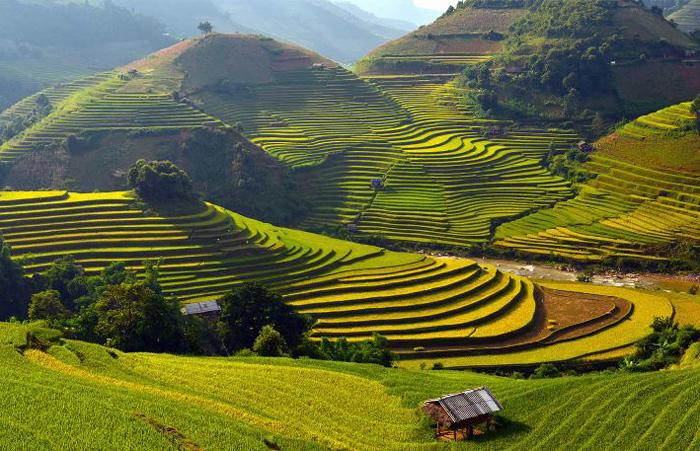 Sapa amazing terraced rice fields