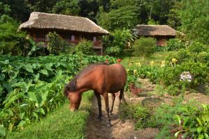 Ecolodge Pan Hou Village 1