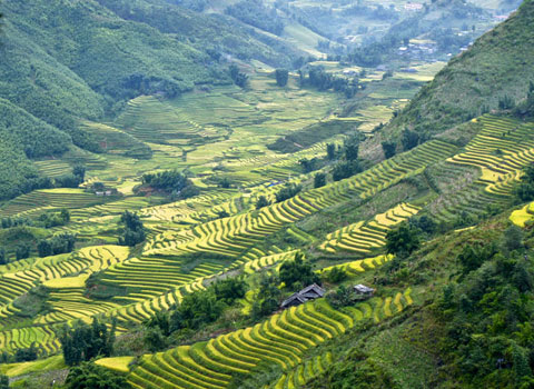 Muong Hoa Valley, Sapa