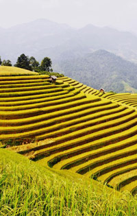 Lao Cai travel guides, Lao Cai tours in Vietnam