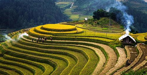 Stunning terraced paddy field in Mu Cang Chai