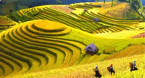 Lao Cai travel guide