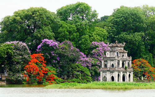 Purple lagerstroemia and red flamboyant flowers in Hanoi
