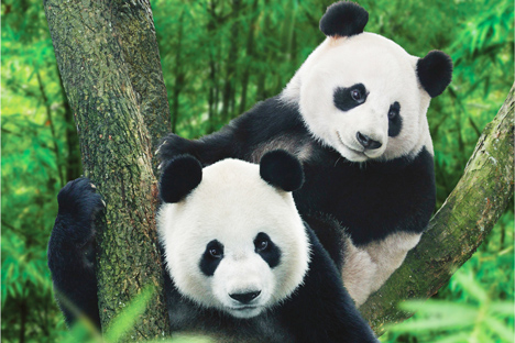 Panda & Ancient Cities in China in 8 Days