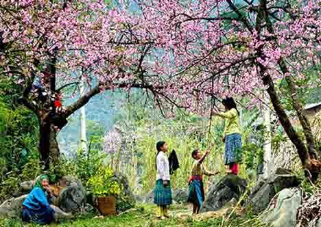 11 Days Northern Vietnam Exposure Tour