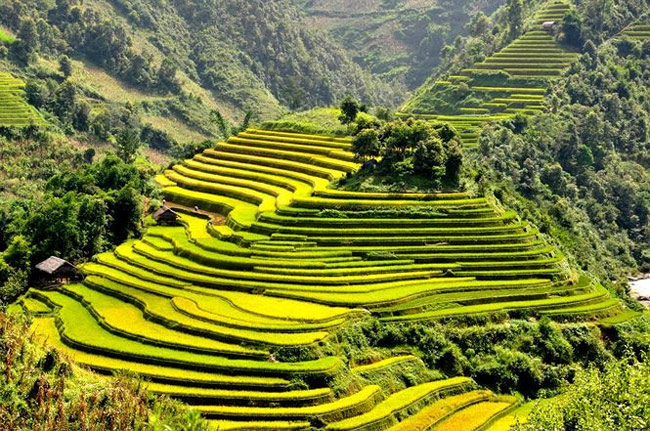 The rice terraces are the symbol of Hmong people's diligence.