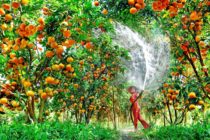 Orchard in Mekong Delta