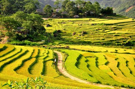 Mai Chau - Pu Luong trekking tour