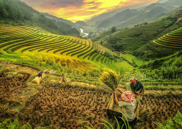 Sink into the Culture of Vietnam Tour in 10 Days